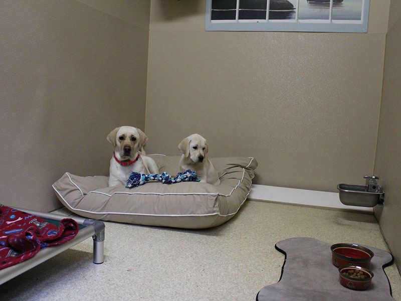 Gallery | Harmony Pet Resort | Eatonton GA